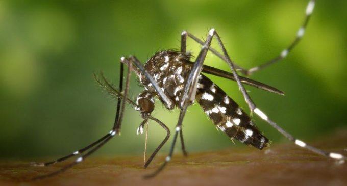 Promising Preclinical Results of Zika Virus Vaccine
